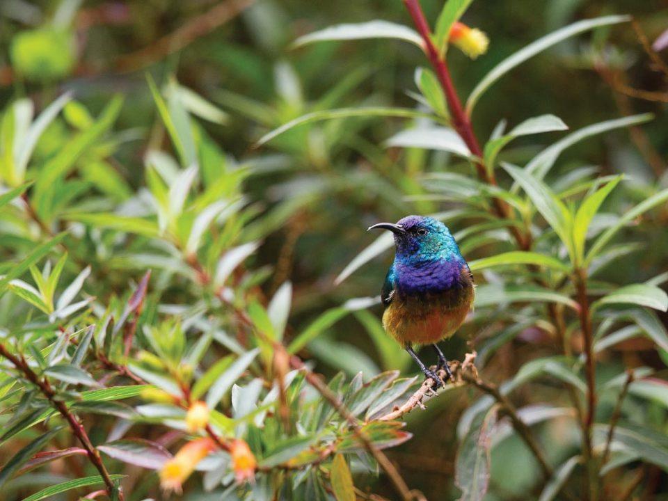 Birds in Uganda - Best Birding Spots in Uganda - Birding in Uganda