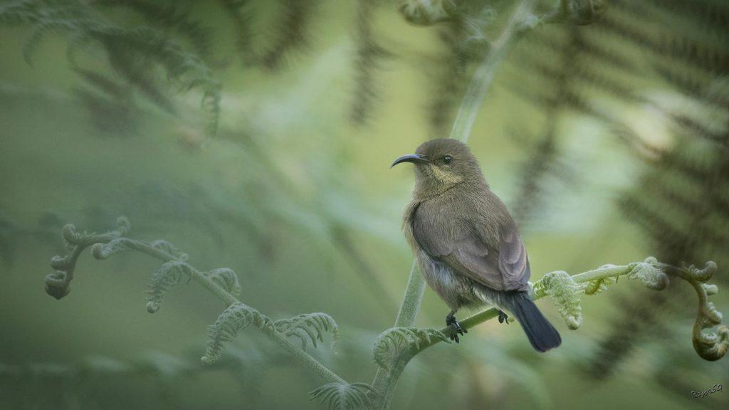 Lake Mburo Bird Watching