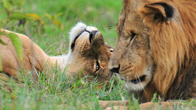 Wildlife Viewing Safaris Uganda