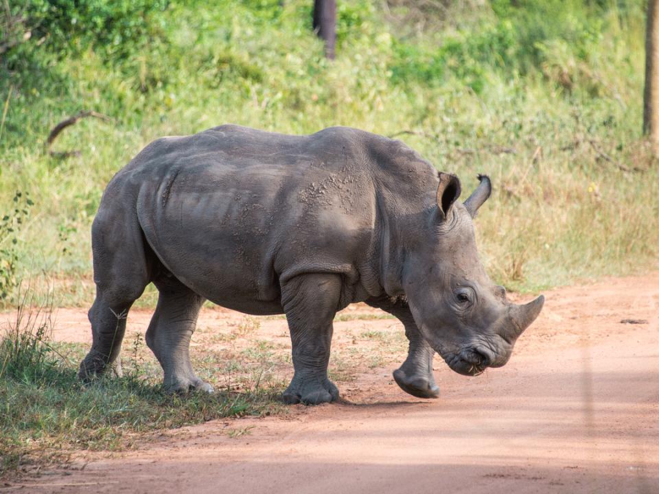 Ziwa Rhino Trekking